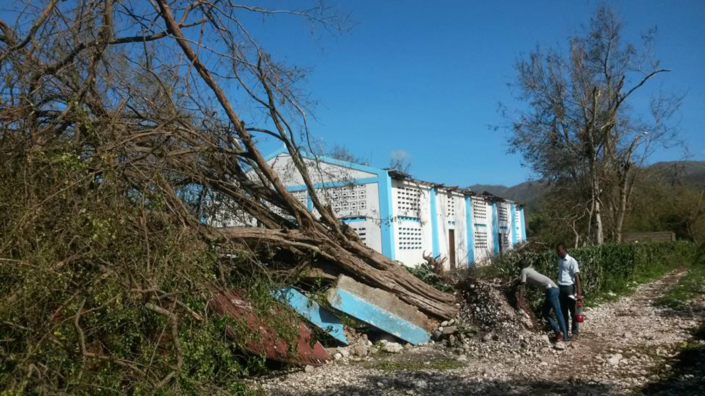 tree and structural damage